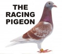 The Racing Pigeon.jpg