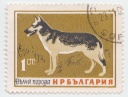 178 German Sheapher Dog Rusia 1ct 1964 Bulgaria     1 Bulgarian stotinka.jpg